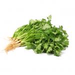 Frisk koriander • Fresh coriander/cilantro • Hara dhaniya